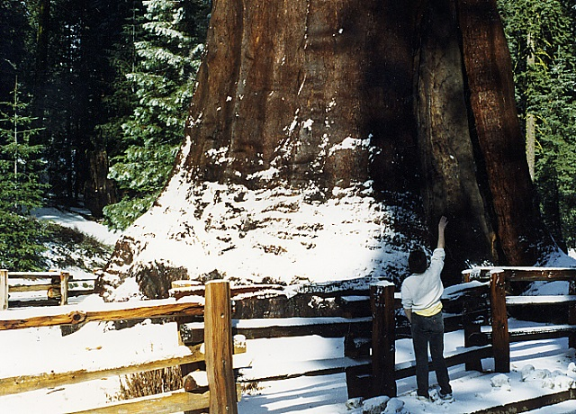 National Parks to Visit in winter Sequoia National Park