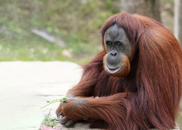 Best Wildlife Vacations in Malaysia
