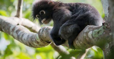 Rare wildlife of Thailand