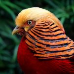 Where to Watch the 5 Most Beautiful Bird in the World?