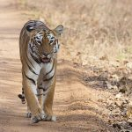 5 Lesser Known Forests and Tiger Reserves in India