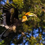 Where Can You See 4 Species Of Hornbill At One Place?