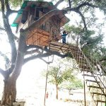 Are There Any Tree Houses Near Mumbai?