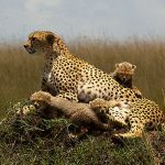 5 Exciting Wildlife Tours for Children