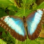 Where are Those Butterfly Parks in India?