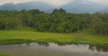 Travel Guide Chapramari Wildlife Sanctuary