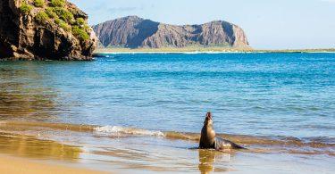 Galapagos Islands Animals
