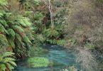 Putaruru New Zealand