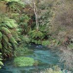 Putaruru New Zealand - Weekend Destination for Nature Lovers