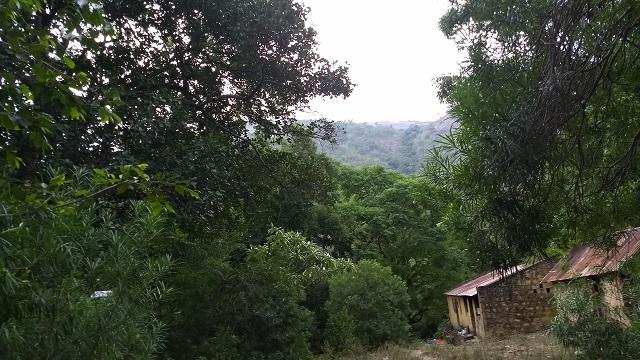 Sathuragiri Hills, Srivilliputhur Grizzled Squirrel Wildlife Sanctuary