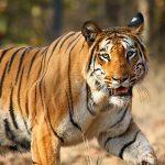 Mukundara Hills Tiger Reserve, Rajasthan