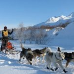 Dog Sledding Destinations to Visit this Winter
