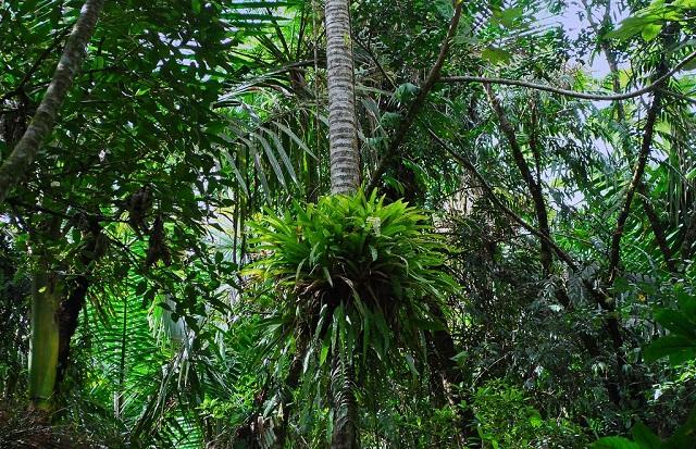 El Yunque National Forest, Puerto Rico, Caribbean
