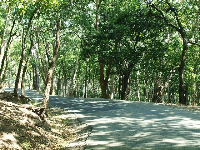 Marayur Sandal Reserve