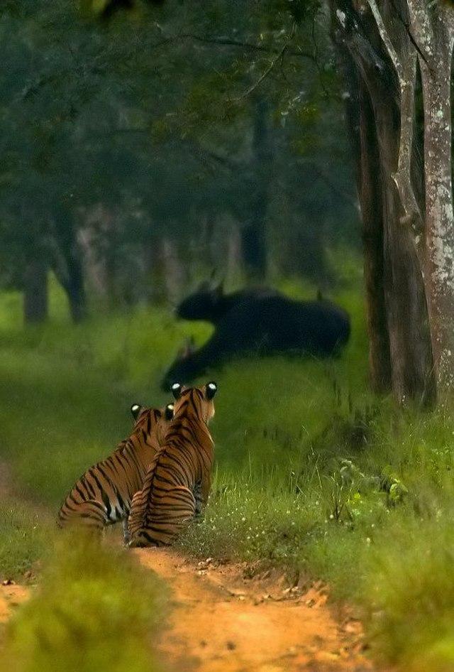 Badra wildlife sanctuary