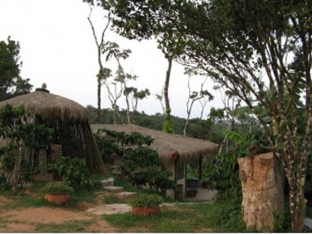 Karadigundy Coffee Plantation Tour in Chikmagalur
