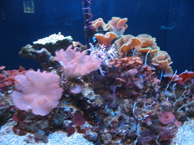 Places to Visit in Florida Mote Marine Laboratory and Aquarium