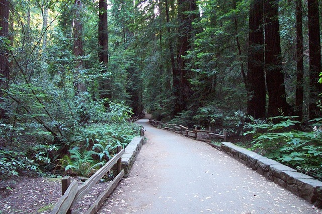 Places to See in California Muir Woods Trail