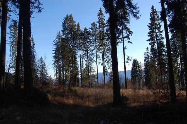 Pokljuka Plateau Hiking