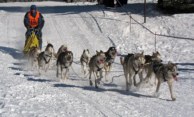 Iceland in December Dog Sled