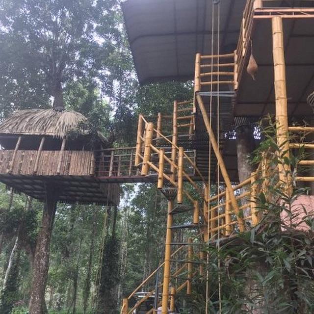 Jungle Jive Tree House
