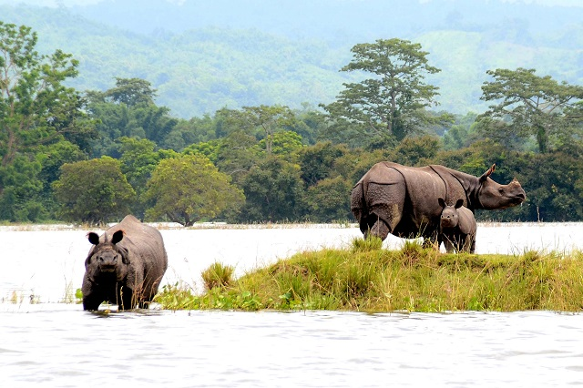 Kaziranga National Park Assam India