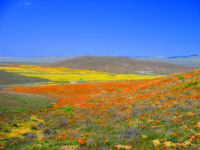 Stunning Spring Blooms around the World Antelope Valley, California