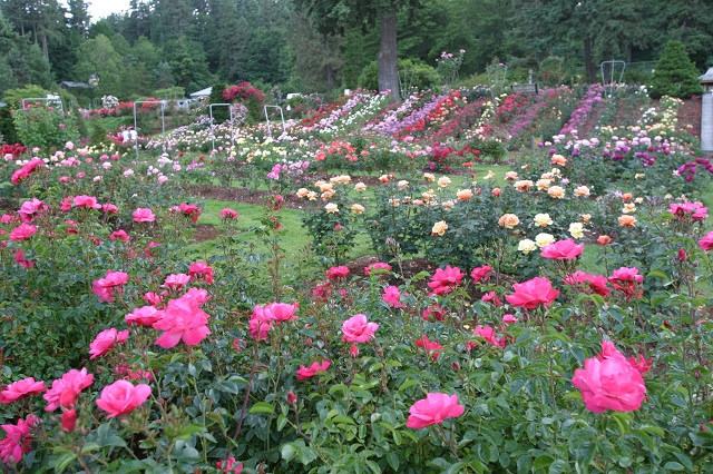 International Rose Garden, Portland