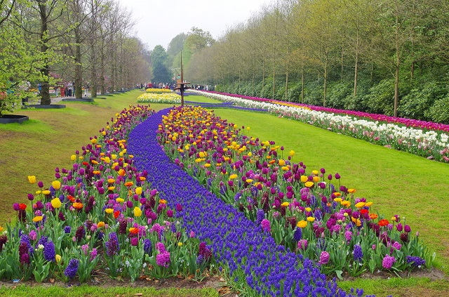Spring Blooms around the World Keukenhof, Netherlands