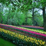 11 Stunning Spring Blooms around the World