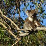 Australian Zoo: Highly Visited Wildlife Parks in Australia