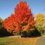 10 Breathtaking Fall Vacation Spots in USA