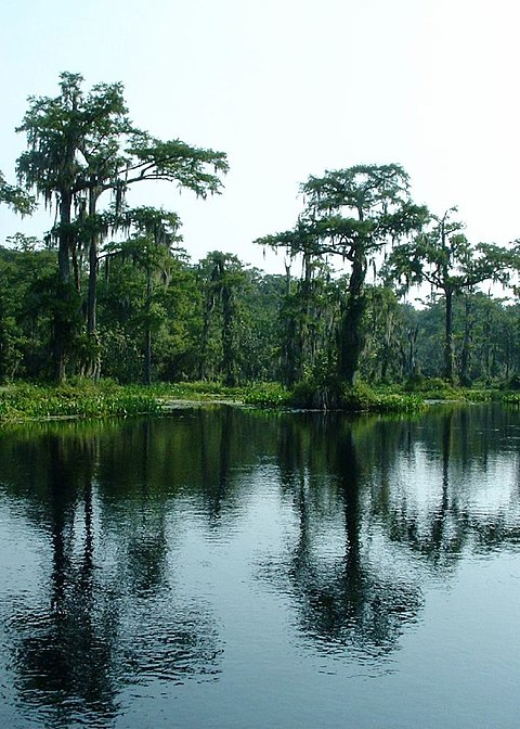 Ultimate Once in a Lifetime Vacation Spots Springs of Florida