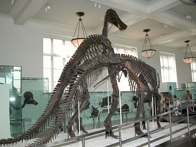 Fossils of Tyrannosaurus