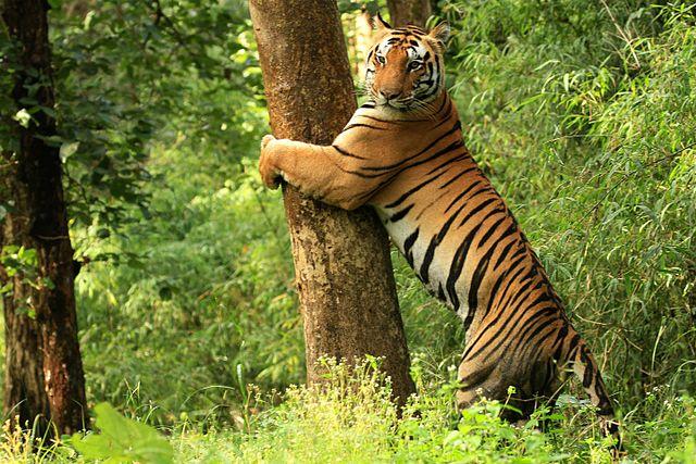 Wildlife Safari India