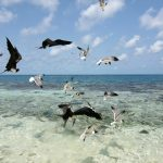 Best Things to Do in Placencia Belize